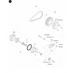 CINGHIA DENTATA CD 170 XL 031 N.21 SULLA FIGURA
